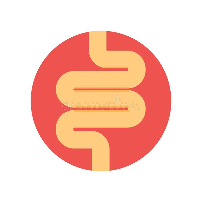 Intestines icon vector sign and symbol isolated on white background, Intestines logo concept stock illustration