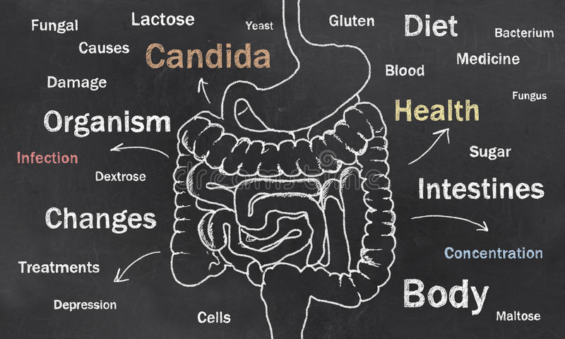 Download Intestines Sketch With Words Stock Illustration - Illustration of candida, causes: 36605386