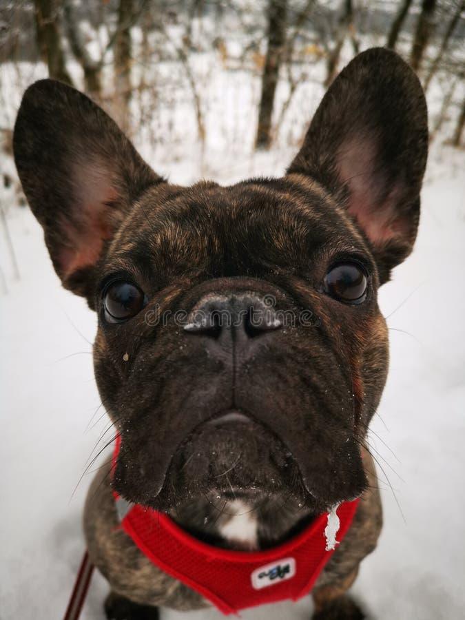 Intimidação branca da neve fotos de stock