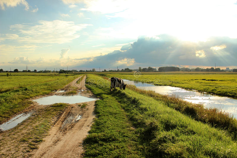 Intimorisca il pascolo in un prato ed il cibo dell'erba vicino al fiume nell'ora legale fotografie stock libere da diritti