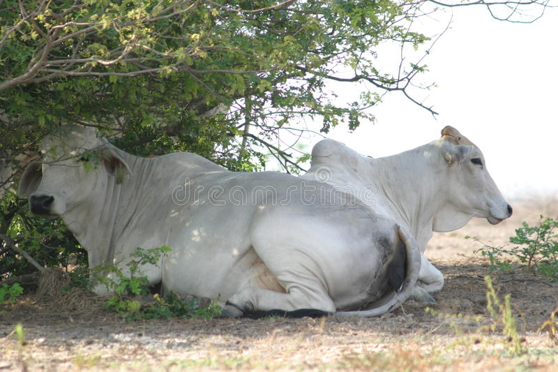 Intimorisce il kakadu fotografia stock libera da diritti