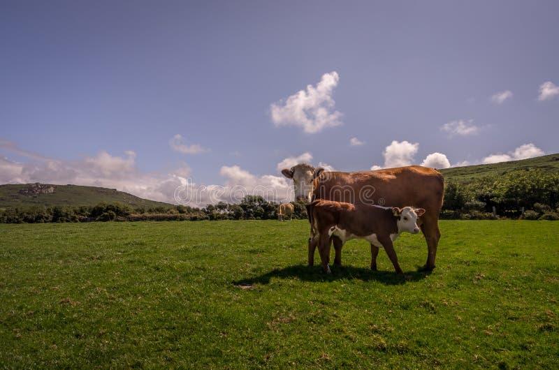 Intorno a posizione rurale di Zennor in Cornovaglia Inghilterra Regno Unito fotografia stock libera da diritti
