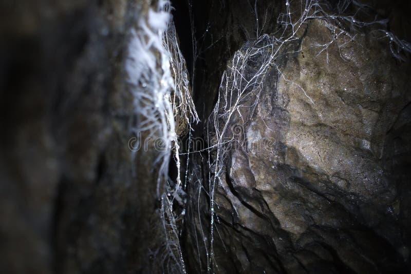 Intressant spiderwebbildande vaggar på i en grotta arkivbild