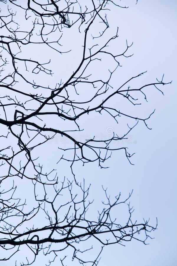 Free Intricacy On Tree Branches Royalty Free Stock Photo - 105964015