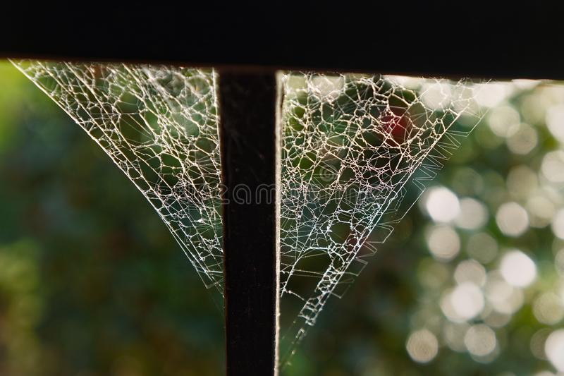 Intricate geometric patterns in spiders web royalty free stock image