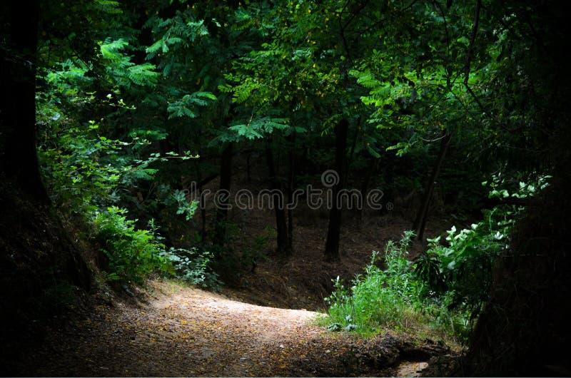Intricate wood. Path through an intricate wood stock image
