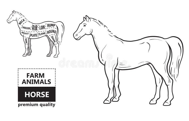 Intrig av bitande hästkött med bitande linjer Designen för slaktare shoppar, banret Diagram på vit bakgrund royaltyfri illustrationer