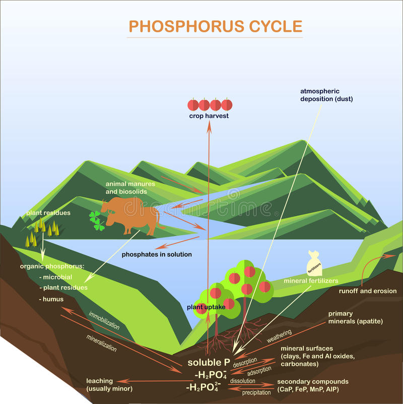 Intrigen av fosforn cyklar, lägenheter planlägger arkivbild