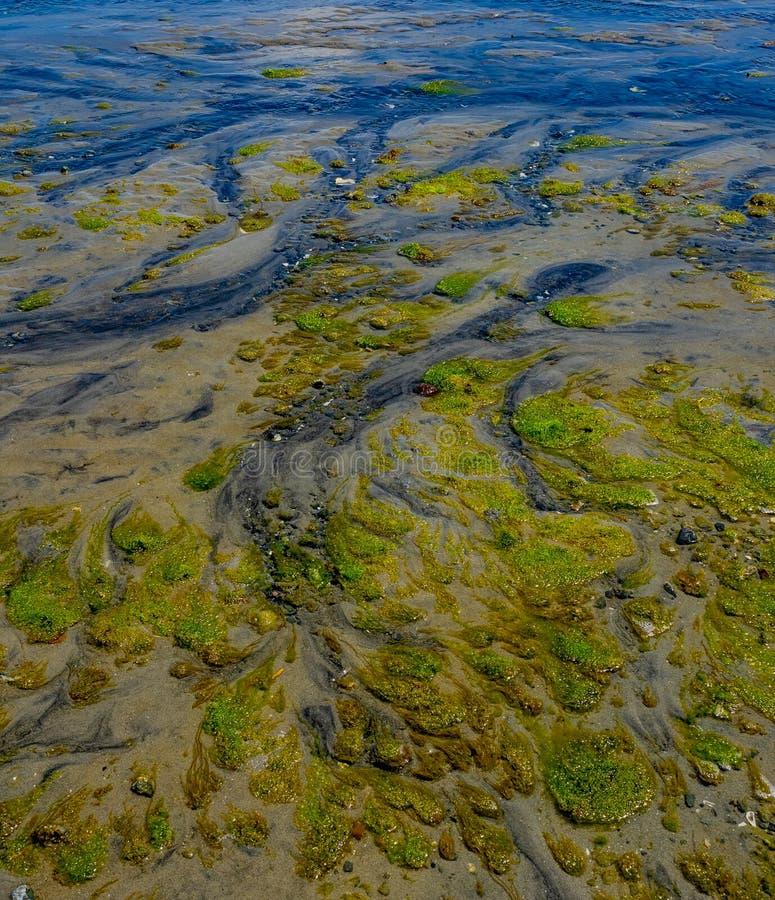 Intrincado patrón sobre la llanura de marea fotos de archivo