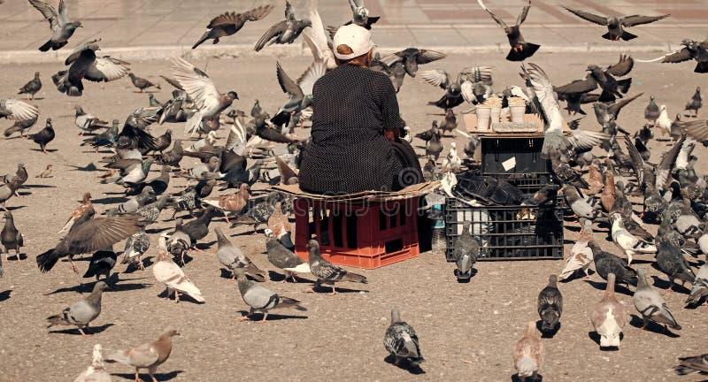 Introducir las palomas Palomas de alimentación de la mujer mayor en la calle Pájaros de alimentación de la vieja mujer sola en el imagen de archivo