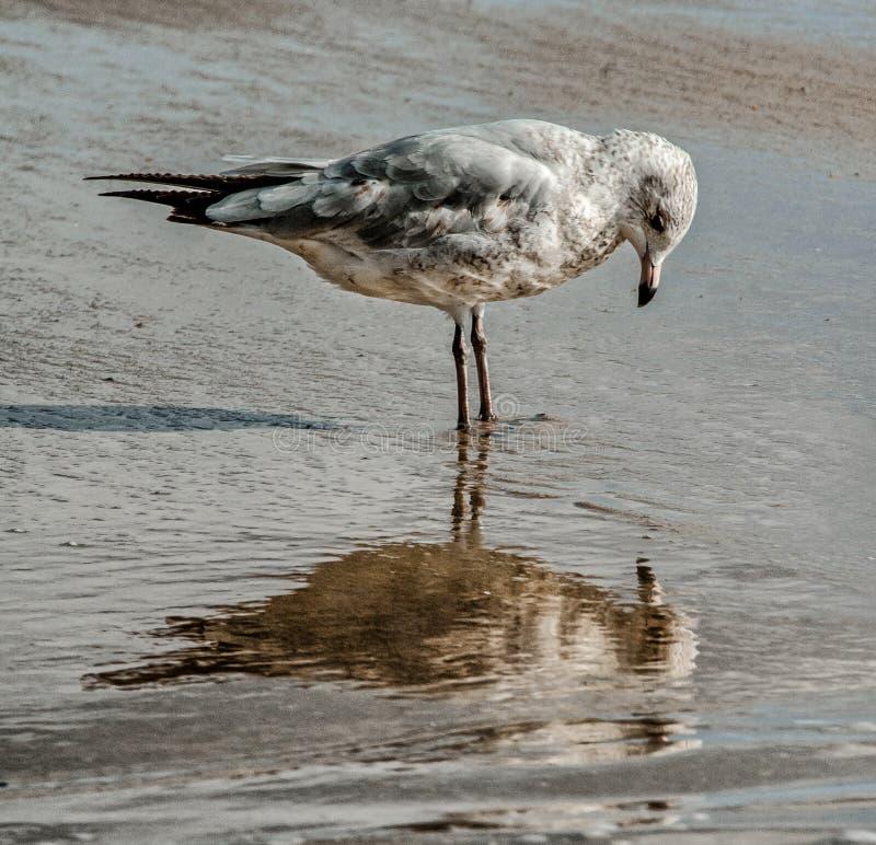 Introspecção ou apenas reflexão? fotografia de stock royalty free