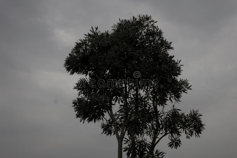 Introvet träd royaltyfria bilder