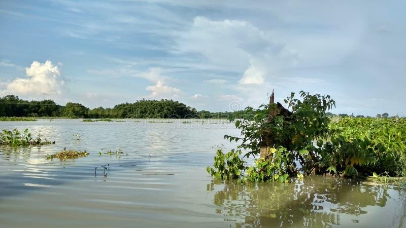 Inundação com beleza fotografia de stock royalty free