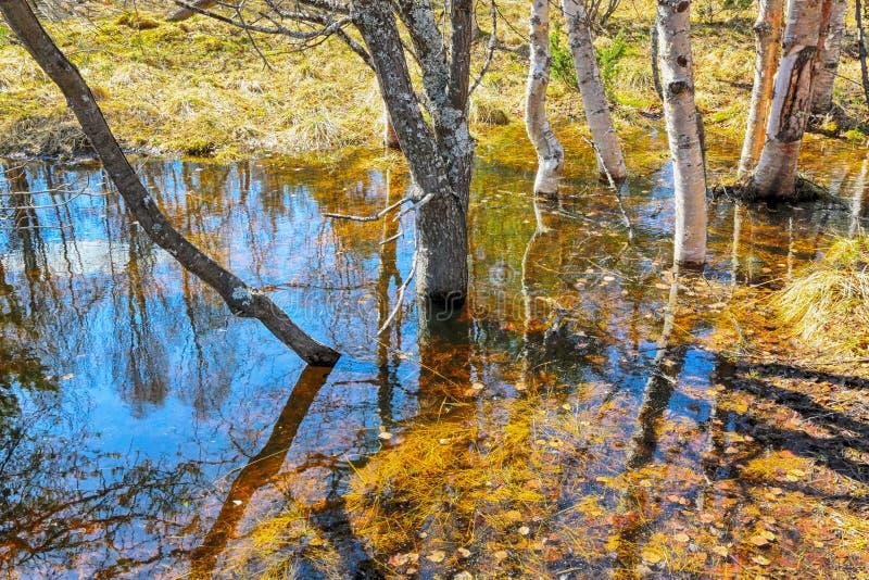 Inundação da mola imagens de stock royalty free