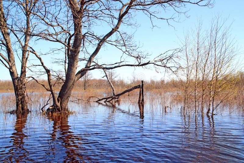 Download Inundação da mola imagem de stock. Imagem de pool, folhas - 12800869
