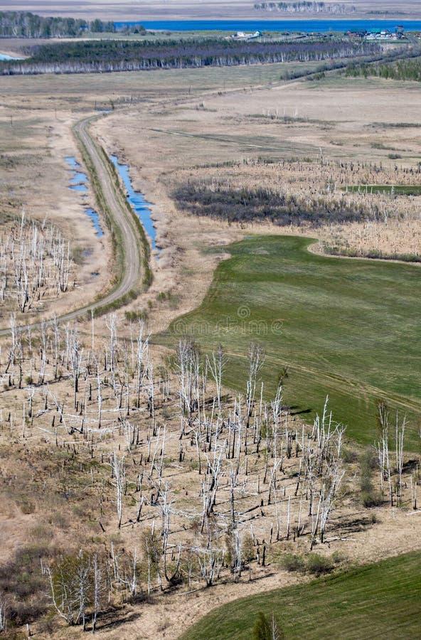 Inundação da mola em Altai imagem de stock