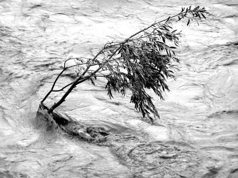 Inundação de oposição da árvore fotos de stock