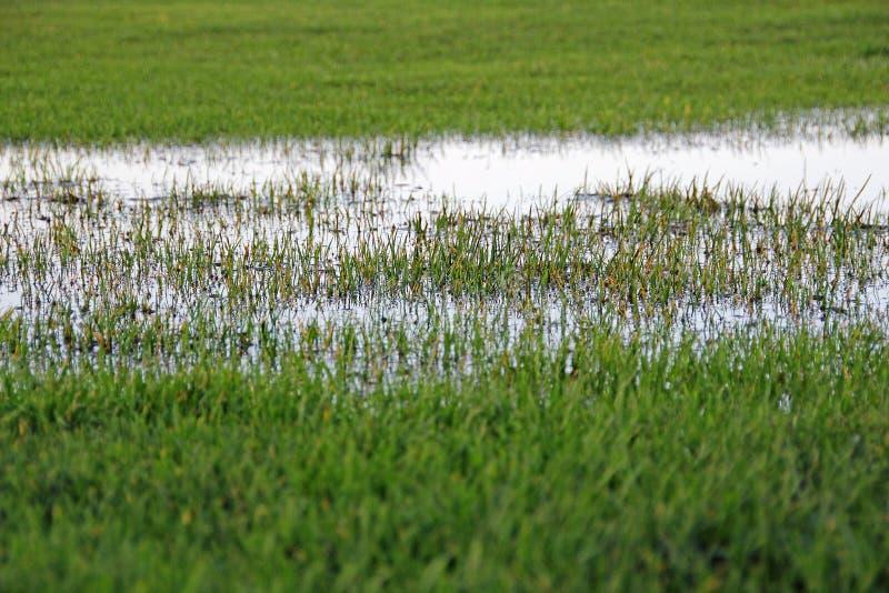 Inundação dos pantanais imagens de stock