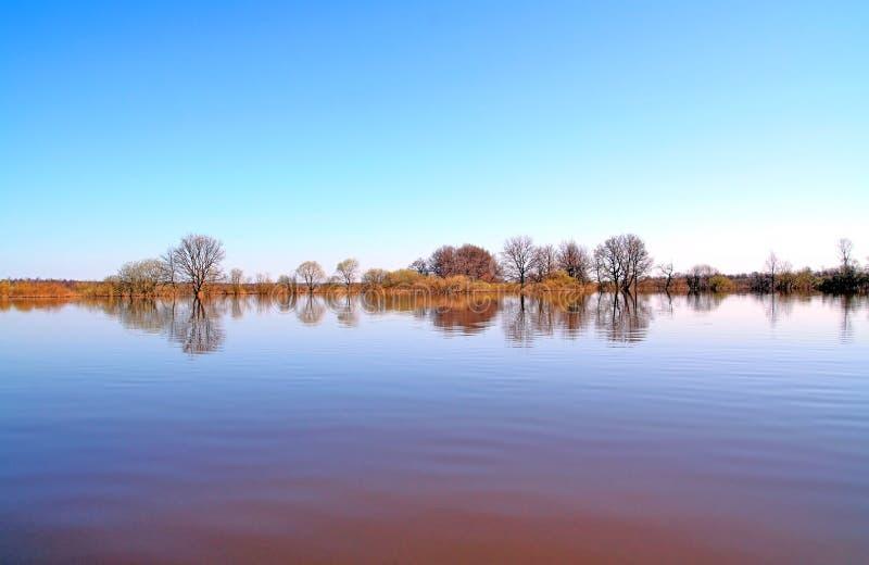 Inundação na madeira imagens de stock royalty free