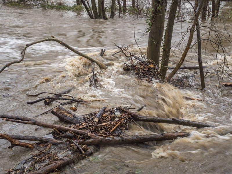 Inundações de primavera e água derretida em movimento rápido durante a chuva intensa fotos de stock