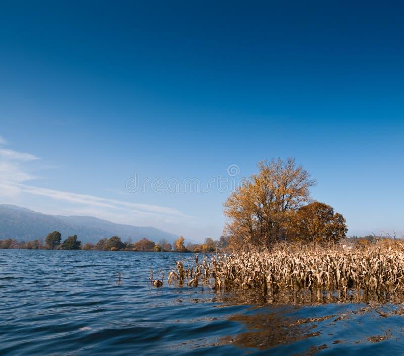 Inundación. Campo de maíz inundado en Eslovenia. fotografía de archivo libre de regalías