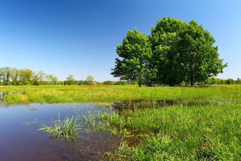 Inundación en prado con los árboles y la hierba fotos de archivo
