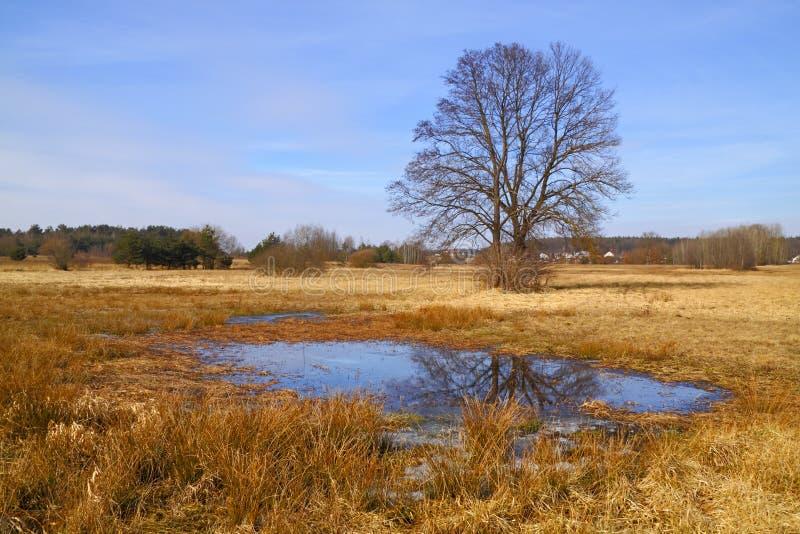 Inundaci?n-prado en la primavera temprana fotografía de archivo