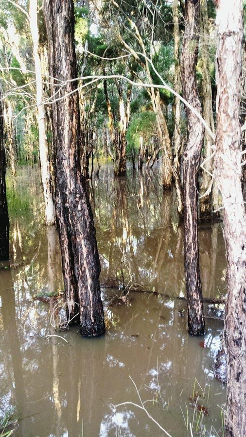 Inundado hacia fuera imagen de archivo