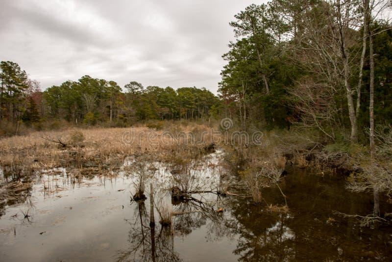 Inunde o lago e as árvores em Jamestown, Virgínia fotos de stock royalty free