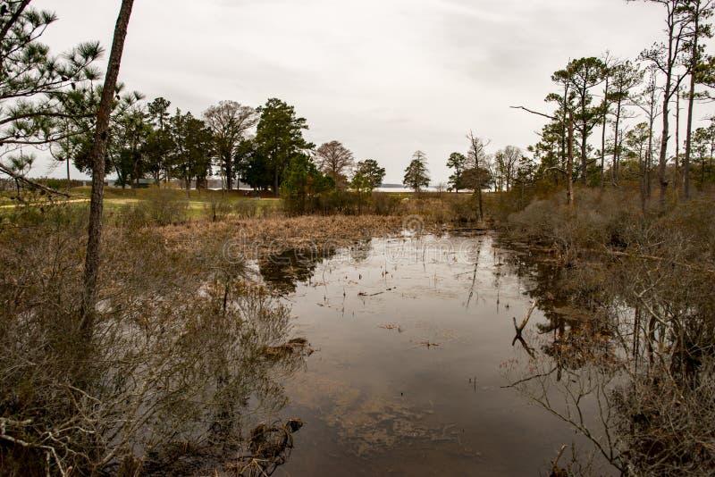 Inunde o lago e as árvores em Jamestown, Virgínia fotos de stock