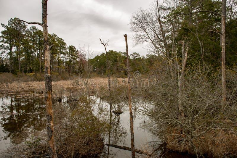 Inunde o lago e as árvores em Jamestown, Virgínia imagem de stock royalty free