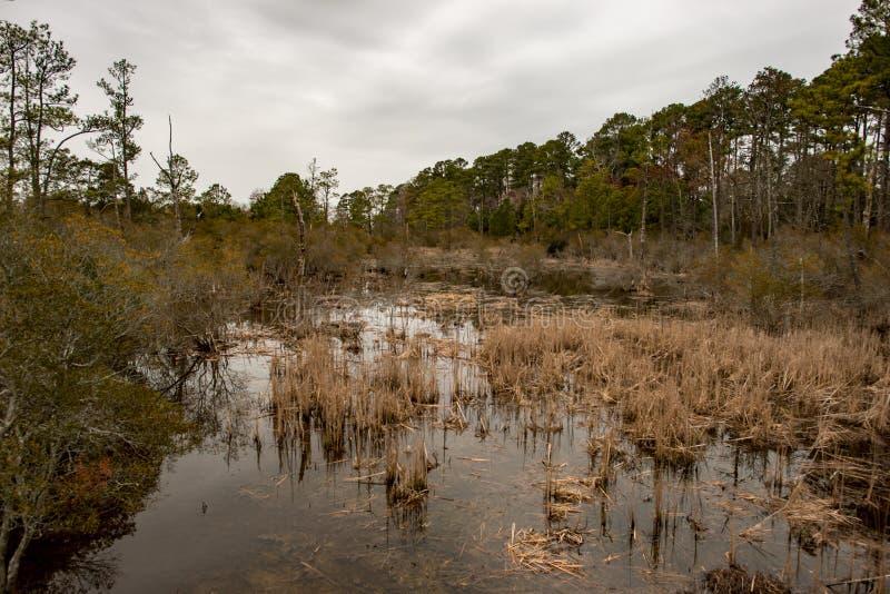 Inunde o lago e as árvores em Jamestown, Virgínia foto de stock