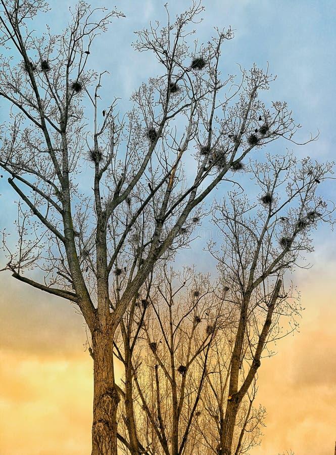 Invasión de los pájaros imagenes de archivo