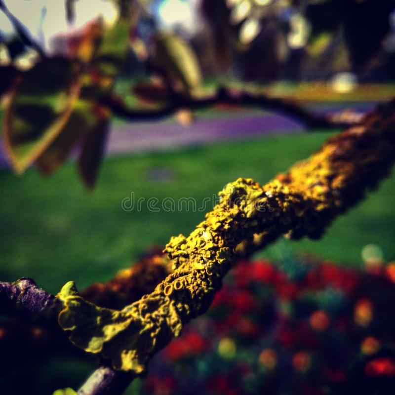 Download Invasion of a tree stock photo. Image of mixture, invasion - 90861294