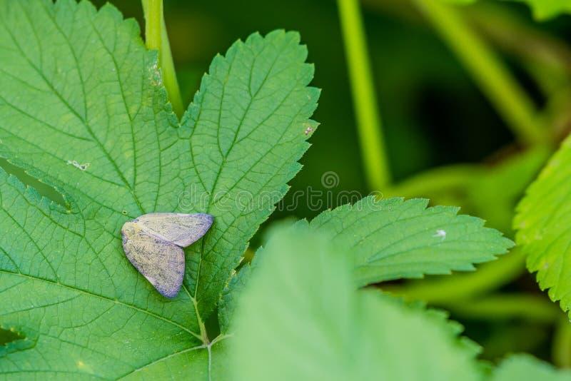 Invasive species on leaf of green plant stock photos