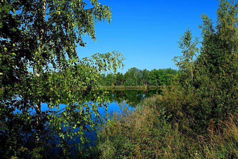 Invaso densamente con la riva degli alberi e dell'erba del lago immagini stock libere da diritti
