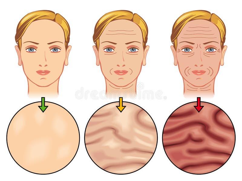 Invecchiamento della pelle illustrazione vettoriale