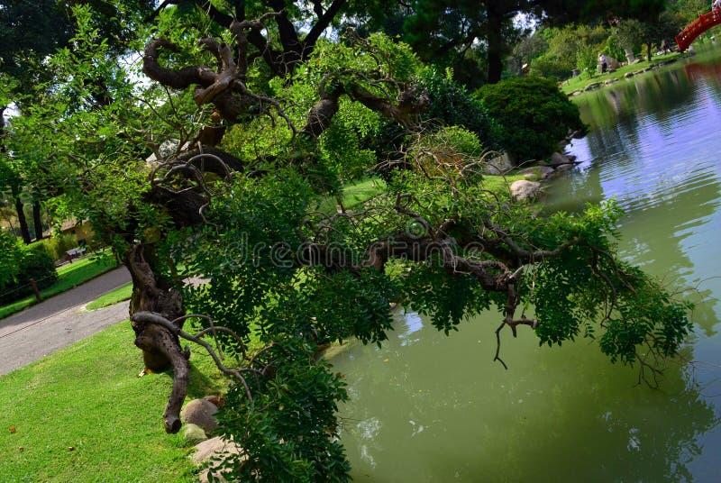 Invecklad natur i staden royaltyfria bilder
