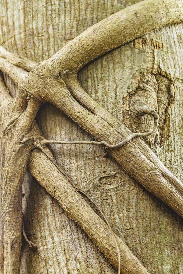 Invecklade filialer på stamträdet fotografering för bildbyråer