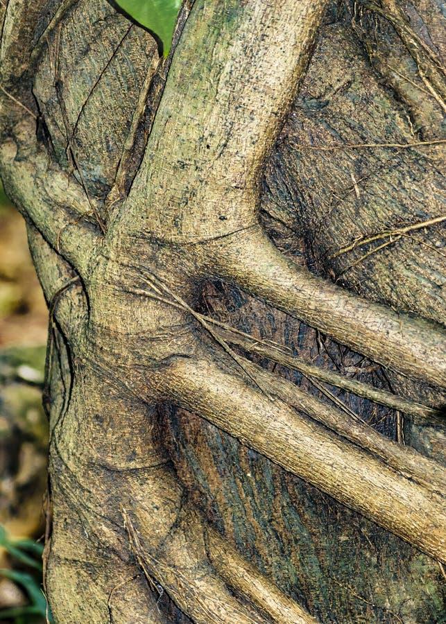 Invecklade filialer på stamträdet arkivbilder
