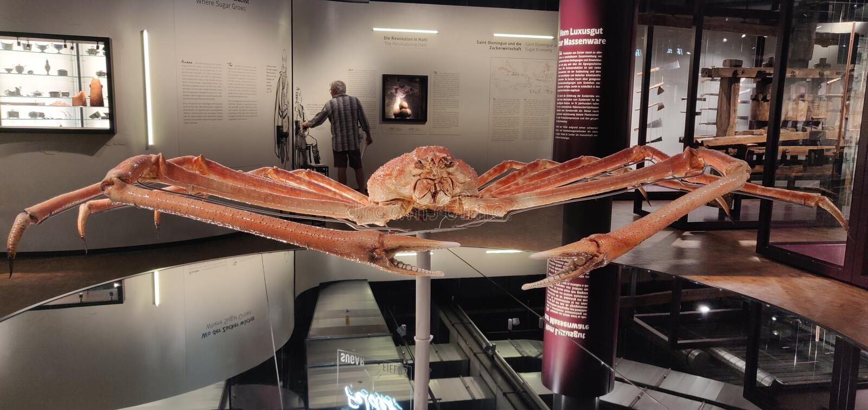 Invencível: Rei Crab imagem de stock royalty free