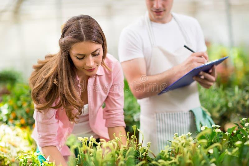 Inventario de plantas en invernadero imagen de archivo
