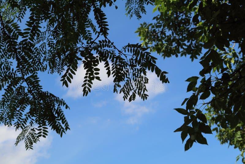 Inverdica i fogli, cielo blu fotografie stock libere da diritti