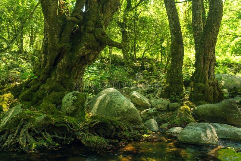Inverdica la foresta rocciosa fotografie stock