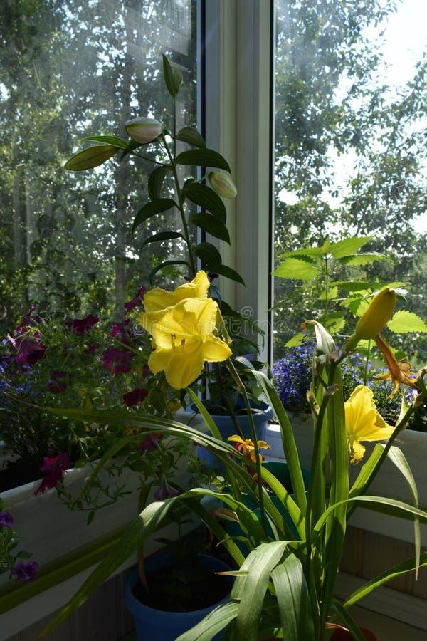Inverdimento del balcone Piccolo giardino urbano con le piante decorative in vasi da fiori immagini stock libere da diritti