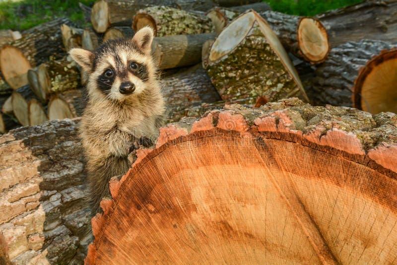 Inverkan av livsmiljöförlust på art arkivbild