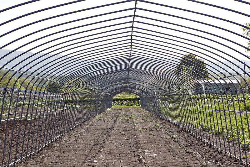 Download Invernadero foto de archivo. Imagen de ambiente, botánica - 41900948