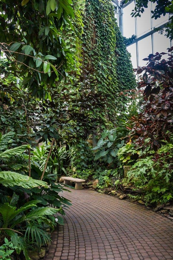 Invernadero Con Las Plantas Tropicales Foto de archivo - Imagen de ...