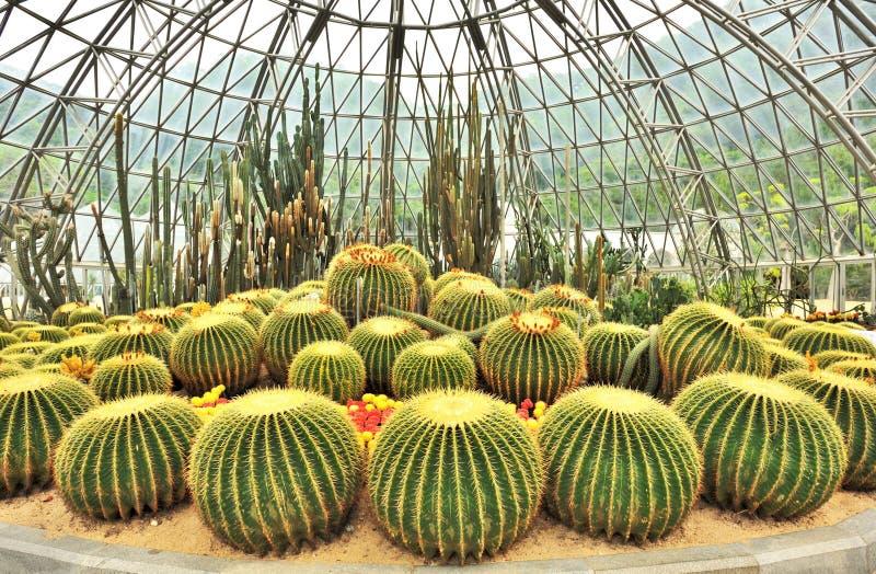 Invernadero de las plantas de desierto imagenes de archivo Plantas de invernadero