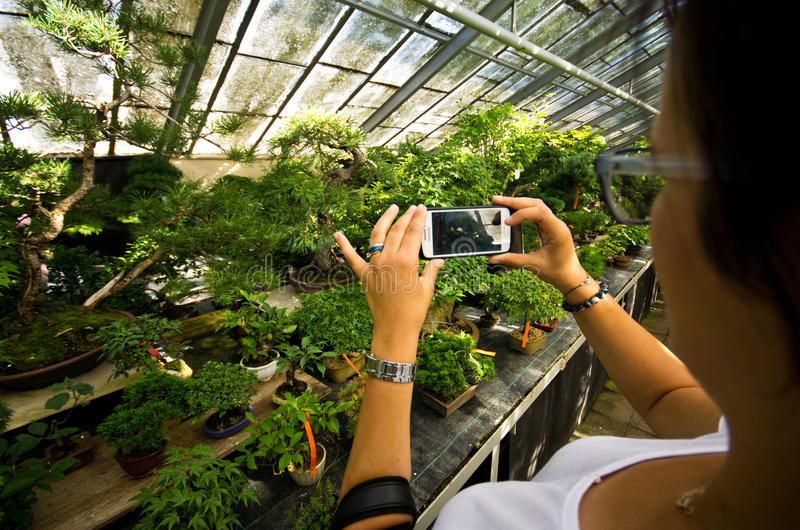 Invernadero de los bonsais en Walbrzych, Polonia foto de archivo
